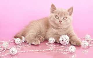 Как назвать кошку? Как можно назвать кошку девочку и кота мальчика?