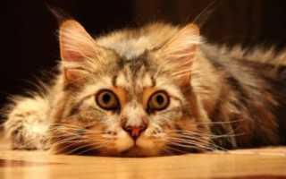 Кошка метит территорию в квартире и на улице – ароматерапия как решение проблемы.