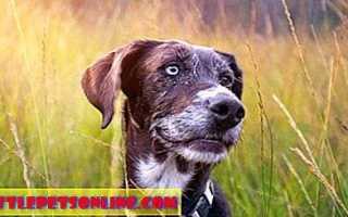 Терапевтические лазер для собак, кошек и других животных