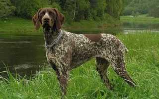 Клички для собак кобелей. Популярные имена и клички для кобелей – для крупных, охотничьих и гончих собак.