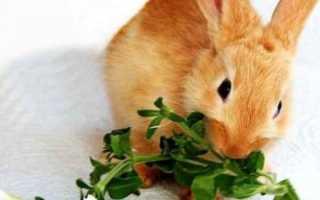 Чем кормить кроликов? Чем кормить декоративных кроликов в домашних условиях?