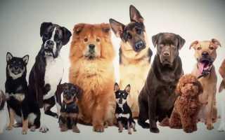 Кличка Саймон: имя для собаки и кошки, значение.