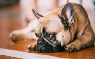 Мочекаменная болезнь (МКБ) у собак – симптомы и методы лечения