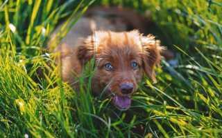 Почему собака ест траву? Возможные причины, почему собака может есть траву на улице и вызывать рвоту.