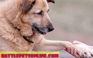 Качество жизни собаки. Как оценить качество жизни собаки?