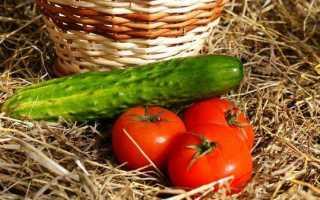 Какие фрукты можно давать кроликам