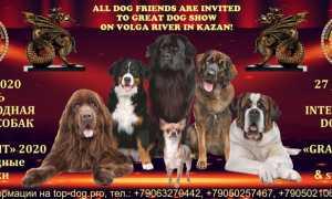 Выставки собак в Казани – календарь 2020 год, расписание по месяцам.