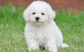Пушистые породы собак – фото и названия. Самые пушистые собаки в мире.