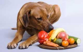 Можно ли давать собаке бананы? Безопасны ли бананы для собак?