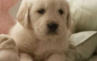 Чеклист проверки здоровья для вашего щенка