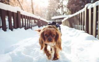 Вестибулярный синдром у собак – симптомы, причины и лечение