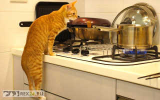 Лакомства для кошки: как выбрать и сделать подходящий рецепт?