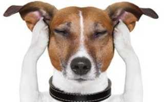 Самые умные породы собак – насколько умен ваш питомец?