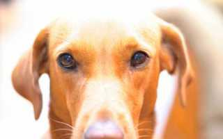 Колит у собак – причины, клинические симптомы и лечение