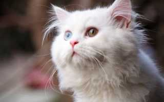 Русские клички для котов и кошек, красивые имена для мальчиков и девочек.