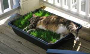 Растения и цветы для кошек: 10 лучших и безопасных растений для вашего питомца
