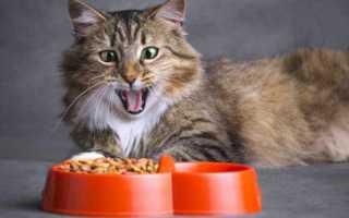 Корм для кошек – влажный или сухой?