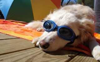 5 способов помочь вашей собаке в жаркую погоду и уберечь ее от теплового удара