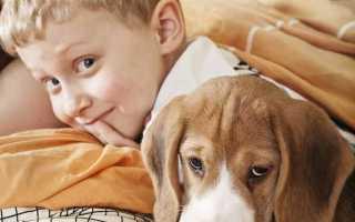 Собака и дети: основные правила поведения