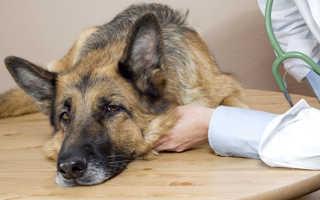 Отравление красками и лаком у собак и кошек