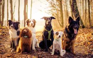Кличка Грей: имя для собаки и кошки, значение.