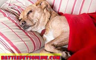 Аспирин для собак, кошек и других животных
