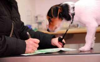 Страхование собак как домашних животных
