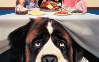 "Порода собаки из фильма ""Бетховен"" – Сенбернар. Описание собаки Бетховен."