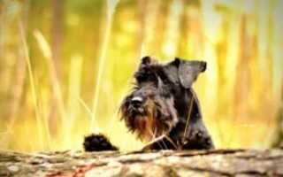 Уход и содержание собаки в домашних условиях