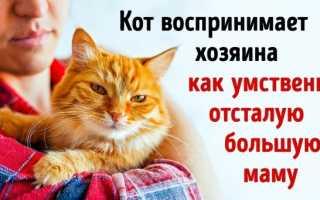 Как думают кошки – как понять кошку и сделать ее счастливой?