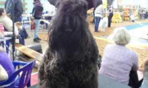 Выставки собак в Мурманске, Апатитах – расписание на 2020 год.