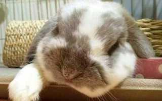 5 симптомов болезней, когда вашему кролику нужен ветеринар