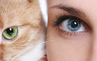 Видят ли кошки цвета? Как они различают цвета и оттенки?