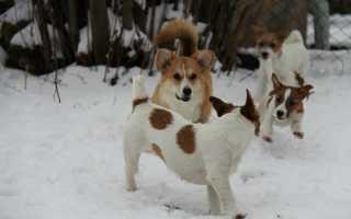 Самые долгоживущие породы собак – сколько лет живут породы собак-долгожителей