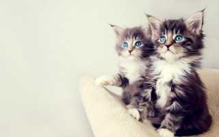 Питание кошки при расстройстве желудка