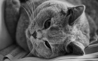 Травмы хвоста у кошек – перелом, боли и ранение. Что делать, если у кошки сломан хвост?