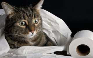 Диарея у кошек – симптомы, причины и лечение. Что делать, если у кошки понос?
