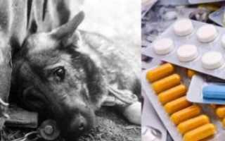 Можем ли мы случайно навредить собаке – как можно отравить питомца?