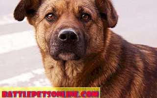 Руководство по усыновлению собаки. Как усыновить питомца?