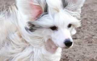 Собака проглотила инородное тело – симптомы и лечение