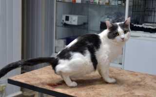 Профилактика и лечение мочеполовых болезней у кошек