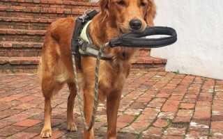 Как регулярно выгуливать собаку. Время и место для прогулки с собакой
