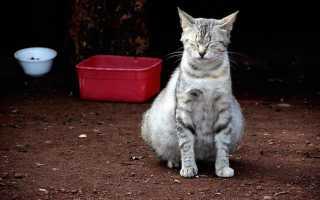 Как узнать, беременна ли кошка. Признаки беременности у кошки – как понять, что она беременна, температура перед родами.