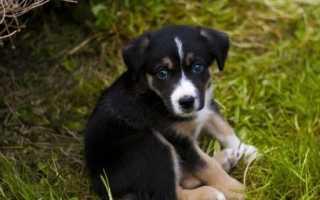 Двойные клички для собак, парные сложные имена для щенков мальчиков и девочек.