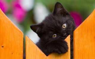 Имена и клички для черных кошек и котят девочек – как назвать черную кошку.