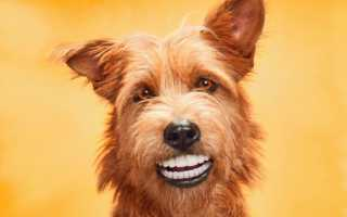 Зубная паста для собак, состав и вкус – можно ли чистить зубы собаки пастой?