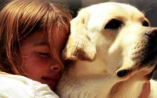 Лучшие семейные породы собак. Какая порода подходит для семьи с детьми?