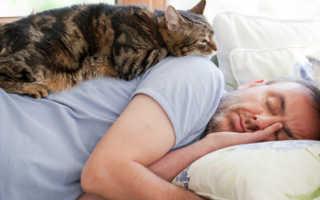 5 секретов как сделать кошку счастливой