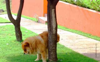 Почему собака ездит на попе? Почему собака ездит и трет попой по полу.