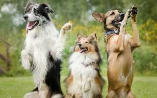 Можно ли наказывать собак и кошек. Почему наказания следует избегать?- PetsTime.ru